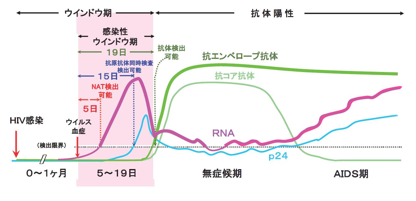 法 核酸 増幅